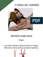 Arterias y Venas Del Hombro