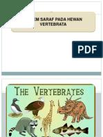 Sistem Saraf Pada Vertebrata12
