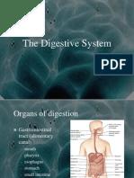 digestivesystem 02