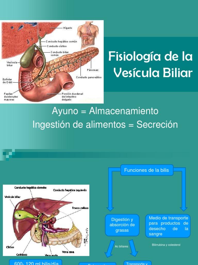 Fisiología de Vías Bilaires