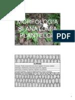 Morfologie Ah 1 Botanica Curs