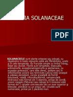 Familia Solanaceae