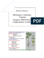 botanicas_histologiaIMAGENS