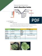 Deskripsi Megaskopis Dan Mikroskopis Mineral Pada Deret Bowen2