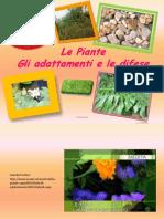 Adattamenti delle piante