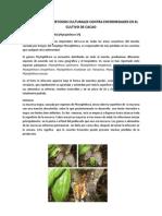 Control Cultural en Cacao