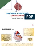 Aparato Cardiovascular Dr. Collada
