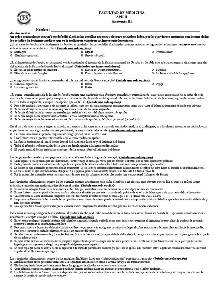 Taller Anatomia Renal Estudiantes 2014 Fabian