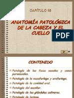 19, Patologia de Cabeza y Cuello