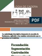Embriologia de La Cadera