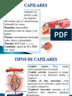 Diapositiva de Sistema Respiratorio y Circulatorio