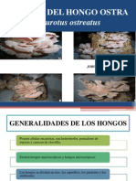 Cultivo Del Hongo Ostra Pleurotus Ostreatus