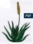 Aloe Vera La Planta Que Cura