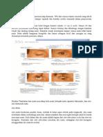 Penglihatan Adalah Organ Penerima Yang Dominan (Autosaved)