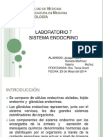 Lab. 7 Sistema Endocrino