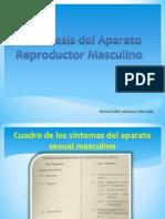 Anamnesis Del Aparato Reproductor Masculino-MAGGY
