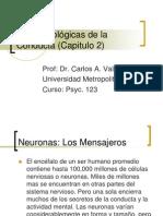 Bases Biologicas de La Conducta Capitulo 2 1226609390022306 9