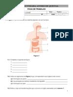 Ficha de Trabalho 3 Sistema Digestivo
