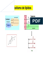 Metabolismo Lipidos 2010
