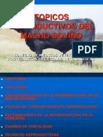 Topicos Reproductivos Del Macho Bovino