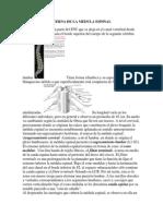 Estructura Externa de La Medula Espinal