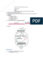 Tema5 bacteriofagos