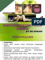 26807882 Anatomi Sistem Panca Indra