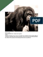 Caption Orangutan