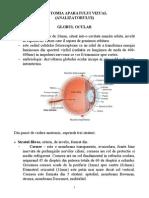 1.Anatomia AP. Vizual