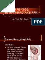 Anatomi Fisiologi Sistem Reproduksi Pria