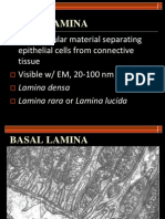 Module 2 - Basal Lamina, Cell Polarity, Cell Renewal