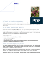Indigenous Plants Australia