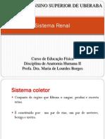 Aula 5 Sistema Renal (2) (1)