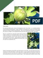 Figs Gardening