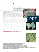 Downy Mildew Control for your Garden