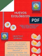 Exposición Huevos El Criollito (3) Calvete
