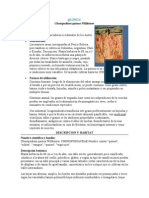 QUINUA.doc