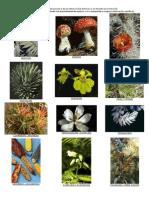 flora y fauna en peligro de extincion en honduras.docx