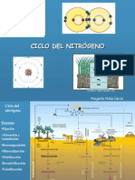 ciclo-del-nitrgeno-1230642587664994-2