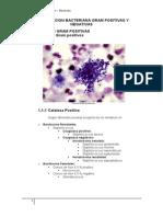 03-BACTERIAS GRAM + Y - Bacterias con su respectiva enfermedad y sintomatología
