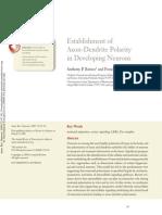 Establishment of Axon-Dendrite Polarity in Developing Neurons