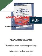 T02.Adaptación Celular