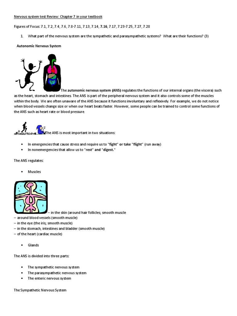Workbooks » Anatomy & Physiology Coloring Workbook Answers Chapter 5 ...