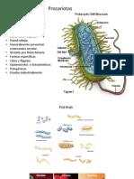6 Tipos de Celulas 2