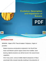 1. Evolution, Description and Importance of Banana_1