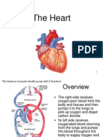 Lecture 18 - The Heart