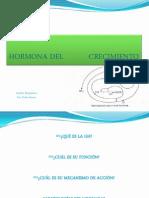 HORMONA CRECIMIENTO2