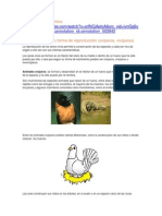Animales Según Su Forma de Reproducción