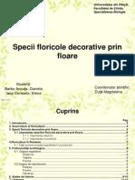 Specii Floricole Decorative Prin Floare