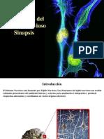 Transmisindelimpulsonervioso Sinapsis 0pdf 130912151005 Phpapp01